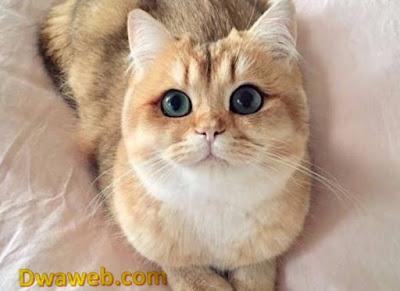 ما الأمراض التي قد تسببها | تنقلها | القطط للانسان ؟