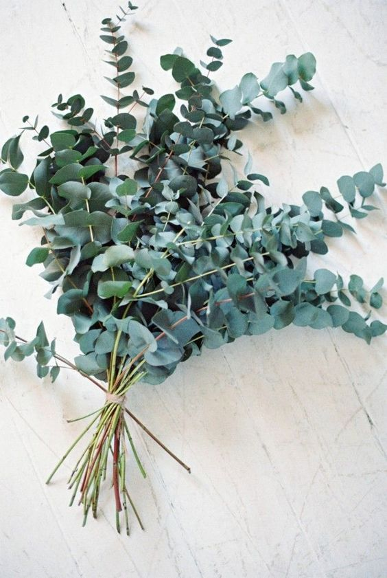 6 ways with Eucalyptus in the home .....