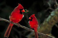Beautiful Red Birds, Living From Glory To Glory Blog