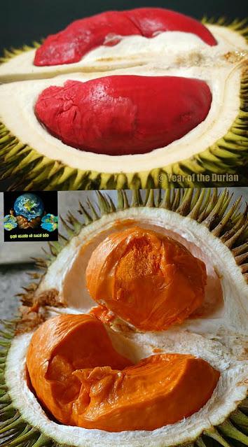 කෙනෙක් අකමැති කෙනෙක් කැමති  ගුණදායක රසවත් පලතුර දූරියන් (Durian) - Your Choice Way
