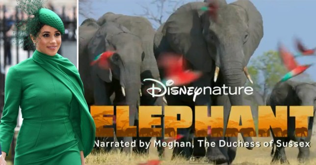 Meghan Markle to narrate new Disney Nature documentary Elephant