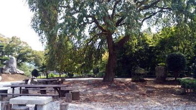 山門の横の大木