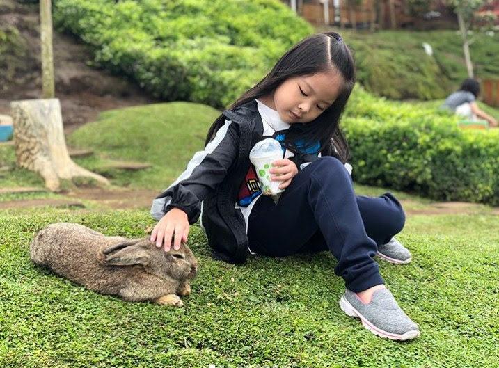 Wisata Edukasi Taman Kelinci Batu Malang dan Cara Pelihara Kelinci Rumahan