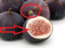 Buah-tin-buah-surgawi-berkhasiat-untuk-penyakit-diabetes