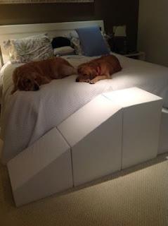 escadas e rampas para cães goldem e labrador