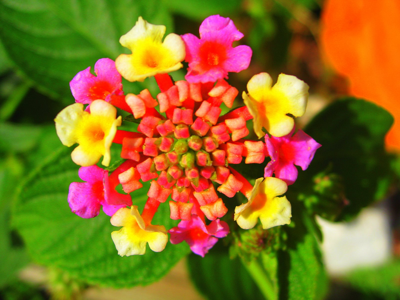FLOWERS OF THE BLUE PLANET: EXOTIC FLOWERS