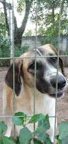 WhatsApp%2BImage%2B2020 07 30%2Bat%2B12.57.31 Niterói tem feira virtual para adoção de cães e gatos neste sábado