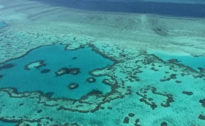 La Grande barriera corallina ha perso metà dei suoi coralli