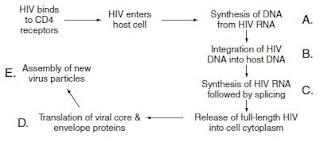 Human Immunodeficiency Virus Case