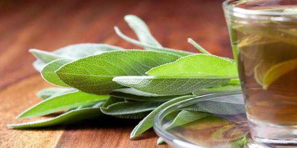 Here's What Happens to Your Body When You Drink Sage Tea Every Day