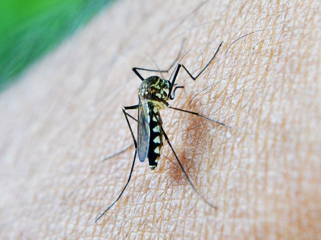 Situación actual de la Malaria en tiempos de Pandemia por COVID-19 | TeranMed (2021) Actualización