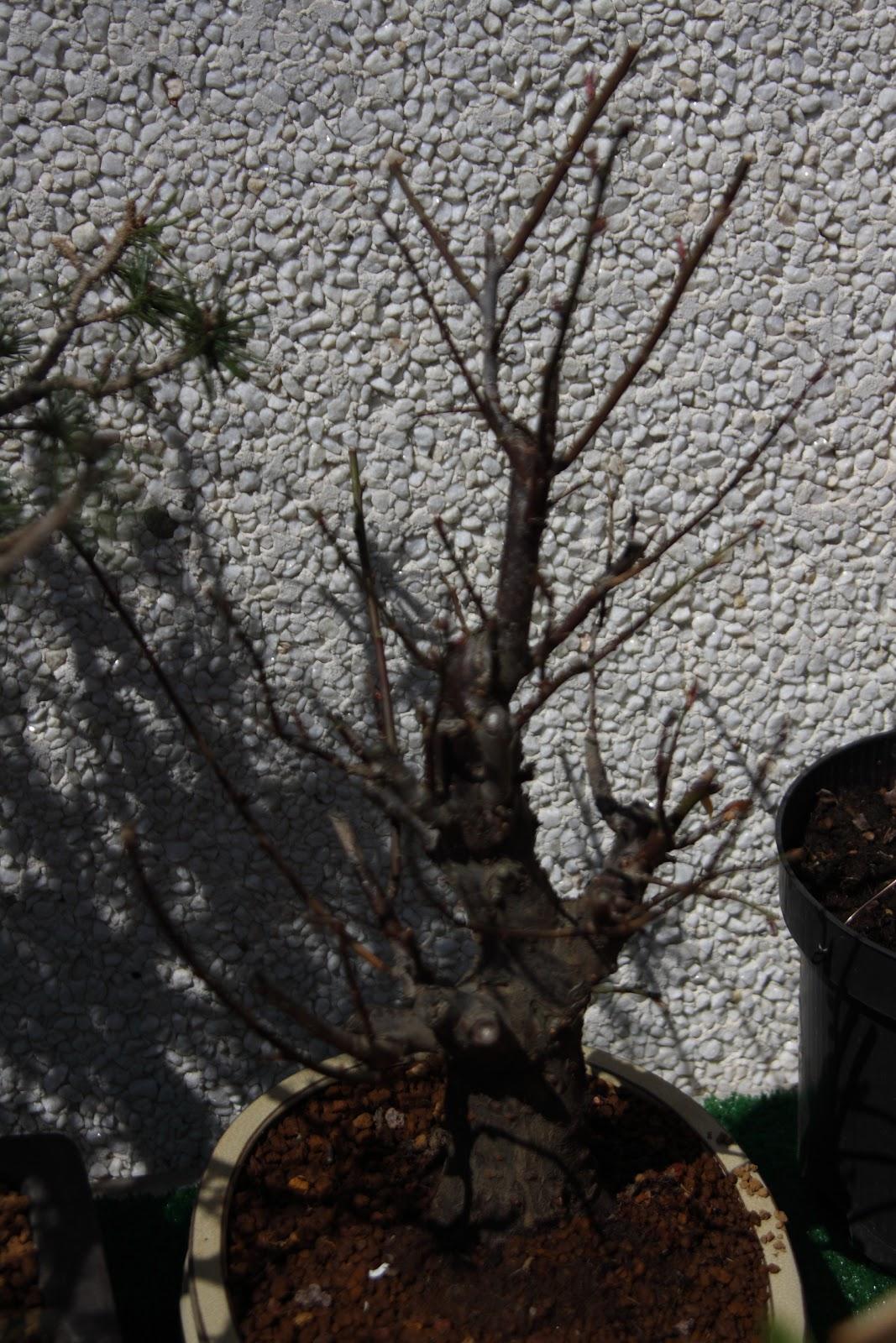 Mis cosas camino recorrido por prunus mume flor roja for Vivero los penotes