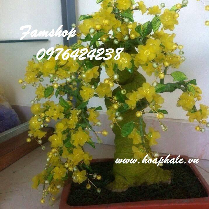 Goc bonsai mai dao cay hoa mai o Huong Vien