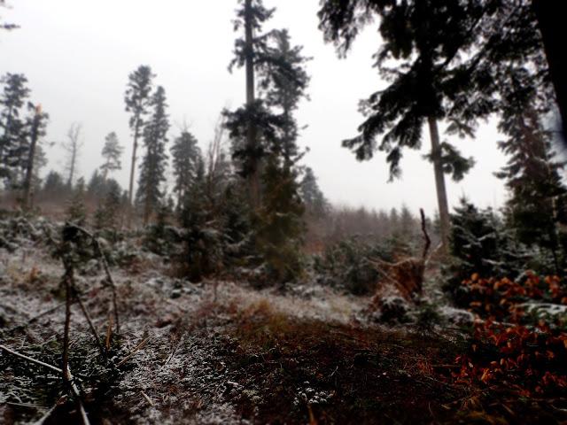 Lasy i wiatrołomy - pod takim znakiem upływa wychodzenie na górę