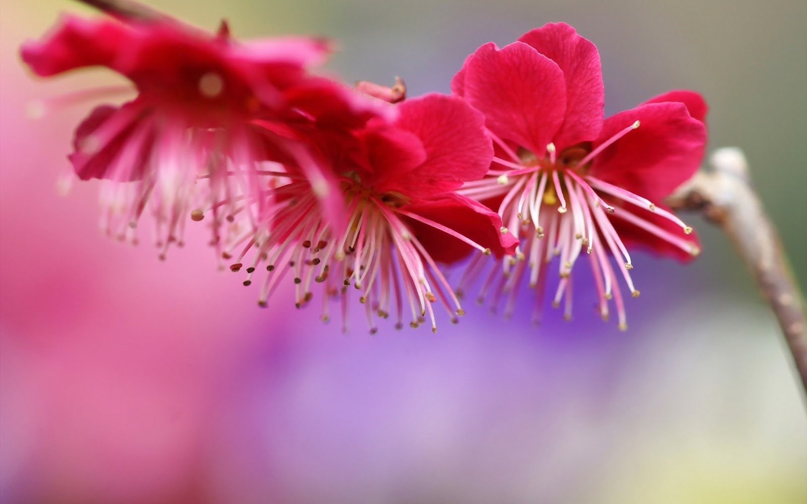 pink spring flowers - photo #29