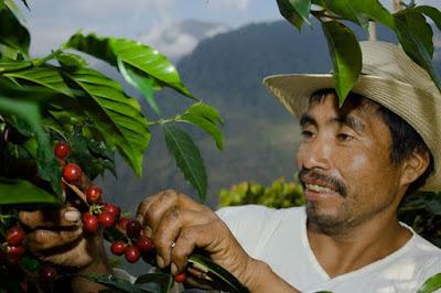 Kopi Termahal di Indonesia dan Dunia