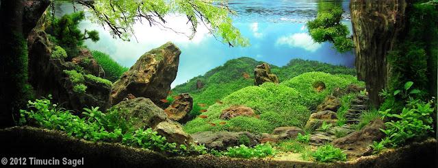 Foto Aquascape yang cantik menarik dan juga menakjubkan