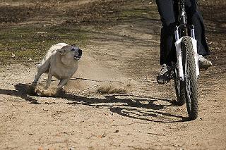 Perro ataca a ciclista
