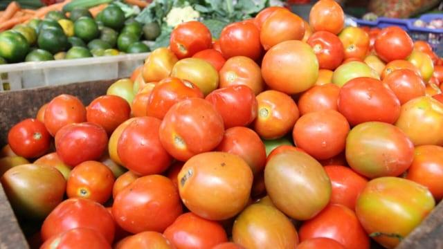 Harga Tomat Berangsur Normal Kembali