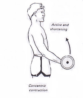 Pengertian Kontraksi Otot Isotonik