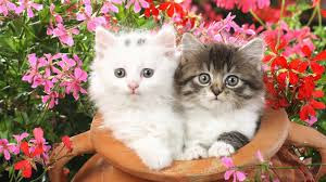 New Baby Cats Animal Hd Wallpaper19