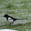 One for Sorrow?