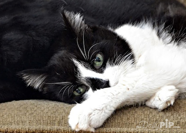 Elsie the deaf feral cat was a foster failure turned adopted cat