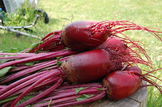 Beetroot Health Benefits – Why Should We Eat Beetroot? - Health Tech Blog