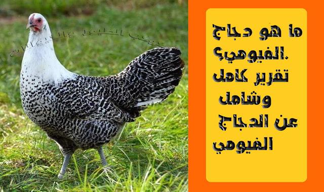 """""""دجاج الفيومي"""" """"دجاج الفيومي المصري"""" """"دجاج الفيومي للبيع في المغرب"""" """"دجاج الفيومي الذهبي"""" """"دجاج الفيومي البياض"""" """"دجاج الفيومي الاصلي"""" """"دجاج الفيومي في الاردن"""" """"دجاج الفيومي بالجزائر"""" """"الدجاج الفيومي"""" """"الدجاج الفيومي الذهبي"""" """"الدجاج الفيومي البياض"""" """"الدجاج الفيومي ويكيبيديا"""" """"الدجاج الفيومي الاصلي"""" """"الدجاج الفيومي متى يبيض"""" """"الدجاج الفيومي الالمنيوم"""" """"الدجاج الفيومي المصري"""" """"الدجاج الفيومي التركي"""" """"الدجاج الفيومي في السودان"""" """"الدجاج الفيومي كم يبيض"""" """"الدجاج الفيومي الاحمر"""" """"الدجاج الفيومي بالمغرب"""" """"ouedkniss دجاج الفيومي"""" """"الدجاج الفيومي pdf"""" """"دجاج الفيومي pdf"""" """"دجاج فيومي المصري"""" """"دجاج فيومي مصري"""" """"دجاج فيومي مصري للبيع"""" """"دجاج فيومي مصري اصلي"""" """"دجاج فيومي مصري القصيم"""" """"الدجاج الفيومي في مصر"""" """"دجاج فيومي للبيع في المغرب""""مميزات دجاج الفيومي/عيوب دجاج الفيومي./مواصفات ديك الدجاج الفيومي /مواصفات اناث الدجاج الفيومي /مواصفات كتاكيت الدجاج الفيومي/حجم الانتاج بالنسبة لدجاج الفيومي/"""