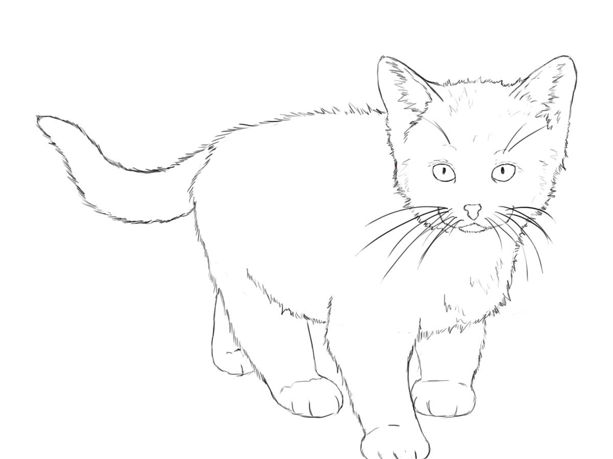 The gallery for --> Kitten Drawing Outline