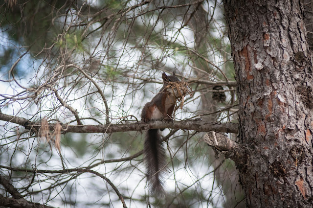 Squirrel spotted on our way to Berat, Albania