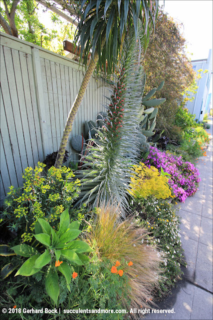 Succulents and More: Mark Delepine\'s Berkeley fusion garden