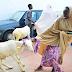 Photos: Wife of Borno State Governor Nana Shettima distributes 300 rams to widows, teachers and less priviledged