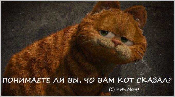 Блог Кота Моти  - Страница 4 E1ri8jzWYAYOZFy