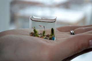 Bonita pecera miniatura