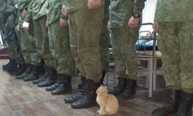 Νιώθετε ασφαλείς ή να φωνάξω τον στρατό και την αστυνομία;