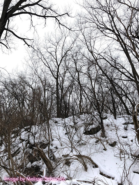 The rocky terrain paints quite a stunning picture in the winter at The Hollows in Cary, IL.