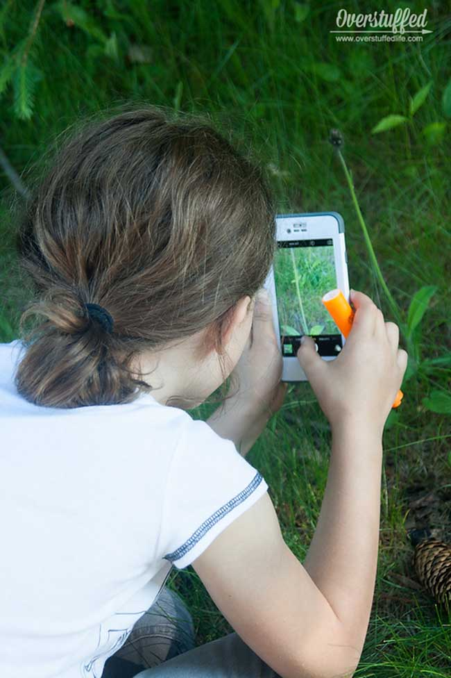 A nature scavenger hunt is a great way to get kids excited about leaving their screens and getting outside. Simply print out the list, grab a camera, and go find some fun things in nature!