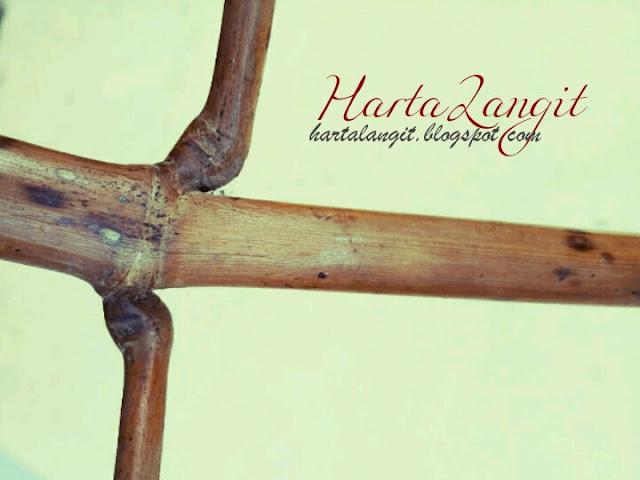 gambar bambu patil lele asli