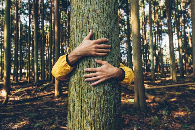 forest bathing benefici terapia