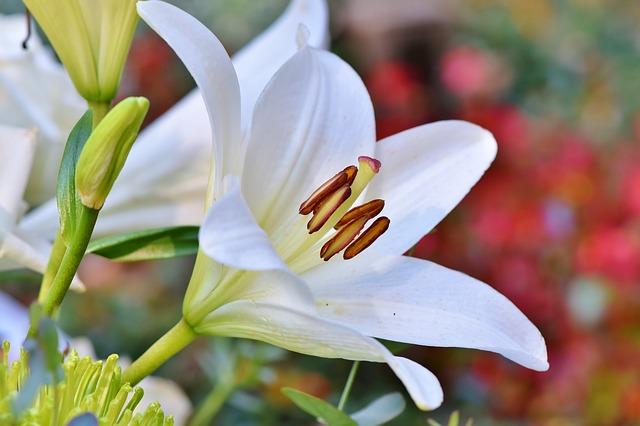 y nghia hoa ly trang