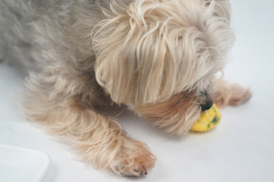 Chicken-Sausage-Mini-Crustless-Quiche-for-Dogs