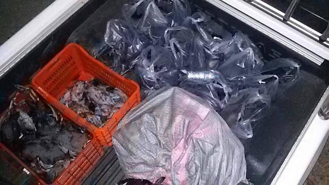 Πρέβεζα: Αμβρακικός κόλπος: Σύλληψη τριών ατόμων, για παράνομη θήρα σε απαγορευμένη ζώνη