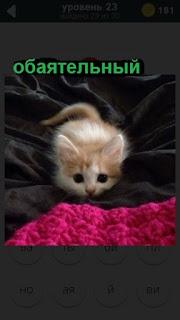 лежит на одеяле обаятельный котенок 23 уровень 470 слов