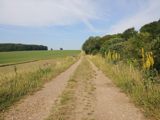 Standon bridleway 19, mentioned in point 4 above Image by Hertfordshire Walker released via Creative Commons BY-NC-SA 4.0