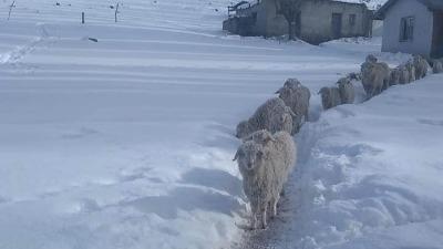 El invierno en los campos Patagónicos. Bajas temperaturas y nieve afectan a fauna y ganado