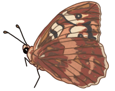 Royalty free butterfly clipart