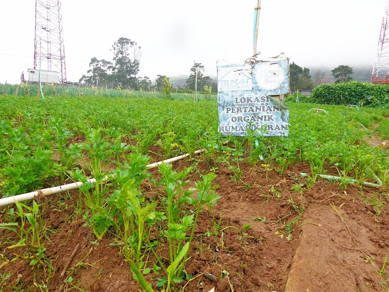 Desa Kanreapia Penuh Potensi Pada Sektor Pertanian Cocok Jadi Kampung Sayur
