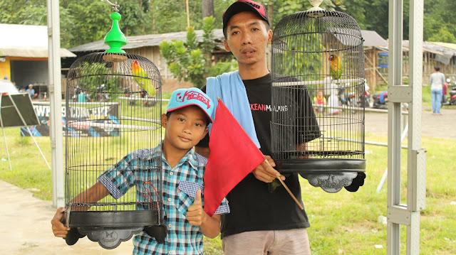 Jawara Lovebird M1 - LB Teyeng milik Om Saipul Gowang dari SHBT Kicau