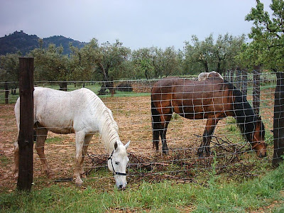 los olivares ,camino ,pantano de Pena, Beceite, Beseit, caballos, yeguas